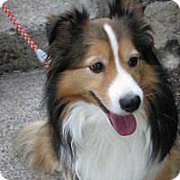 Adopt A Pet :: Dooley - Salem, OR