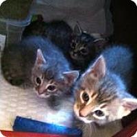 Adopt A Pet :: Carlos - Medford, NJ