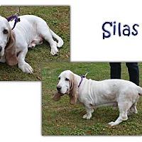 Adopt A Pet :: Slias - Marietta, GA