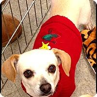 Adopt A Pet :: Bianca - Johnson City, TX