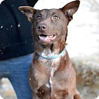 Adopt A Pet :: Della - Salt Lake City, UT