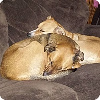 Adopt A Pet :: Charlie and Chauncey - Bardonia, NY