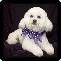 Adopt A Pet :: Susie - San Diego, CA