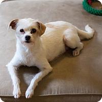 Adopt A Pet :: Sky - San Francisco, CA