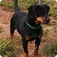 Adopt A Pet :: Taz - West Bend, WI