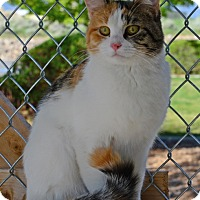 Adopt A Pet :: Star - Gardnerville, NV