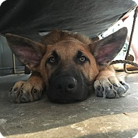 Adopt A Pet :: Zac Cockrell - Jersey City, NJ