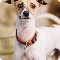 Adopt A Pet :: Turbo - Portland, OR
