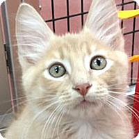 Adopt A Pet :: Cassidy - Woodland Hills, CA