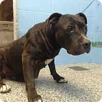 Adopt A Pet :: URGENT on 10/5 SAN BERNARDINO - San Bernardino, CA