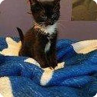 Adopt A Pet :: VIRGINIA - Hampton, VA