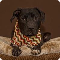 Adopt A Pet :: Deon - Flint, MI