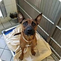 Adopt A Pet :: HEINZ - Canfield, OH