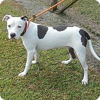 Pit Bull Terrier Mix Dog for adoption in Newport, North Carolina - Farrah