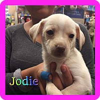 Adopt A Pet :: Jodie - Los Angeles, CA