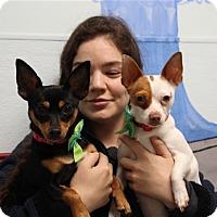 Adopt A Pet :: Salt & Pepper - Elyria, OH