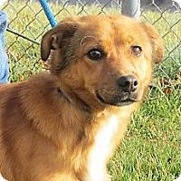 Adopt A Pet :: Ritz - Germantown, MD