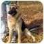 Photo 2 - German Shepherd Dog Dog for adoption in Pike Road, Alabama - Fletcher