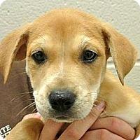 Adopt A Pet :: Maggie - white settlment, TX
