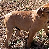 Adopt A Pet :: Piccolo - Byrdstown, TN
