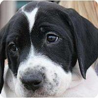 Adopt A Pet :: Venus - Mesa, AZ