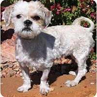 Adopt A Pet :: Gracie and Bella - Gilbert, AZ