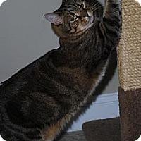Adopt A Pet :: Boots - Waxhaw, NC