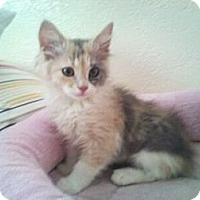 Adopt A Pet :: Mahoney - Modesto, CA
