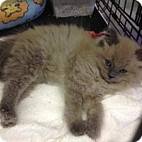 Adopt A Pet :: Stuffy - Byron Center, MI