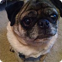 Adopt A Pet :: Harley - Huntingdon Valley, PA