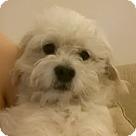 Adopt A Pet :: Luna