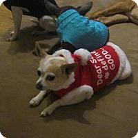 Adopt A Pet :: Pita - Copperas Cove, TX