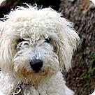 Adopt A Pet :: Dauber