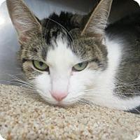 Adopt A Pet :: Camille - Brockton, MA
