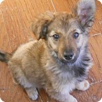 Adopt A Pet :: Jilly - dewey, AZ