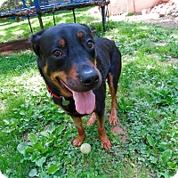 Adopt A Pet :: Diva - Nanuet, NY