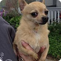 Adopt A Pet :: Fox - Huntley, IL