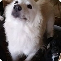 Adopt A Pet :: Sunny - Gainesville, FL