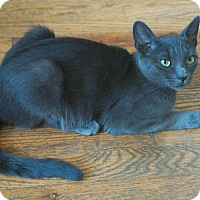 Adopt A Pet :: Gidget - Brooklyn, NY