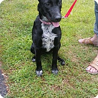 Adopt A Pet :: Harleigh - ROME, NY