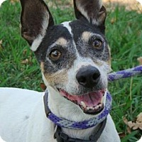 Adopt A Pet :: Jimmy: Low fees and Neutered - Red Bluff, CA