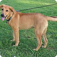 Adopt A Pet :: *Ruby - PENDING - Westport, CT