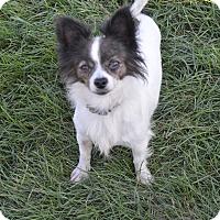 Adopt A Pet :: Catie - Prole, IA