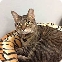 Adopt A Pet :: Tucker - Byron Center, MI