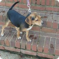 Adopt A Pet :: Peanut - West Warwick, RI