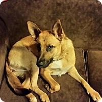 Adopt A Pet :: Minka - Roswell, GA