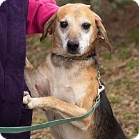 Adopt A Pet :: Raymond: Norwood - Cincinnati, OH