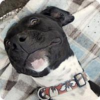 Adopt A Pet :: Gio - tucson, AZ