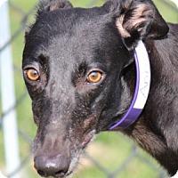 Adopt A Pet :: Anagram - Longwood, FL