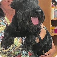 Adopt A Pet :: Brody - Tucson, AZ